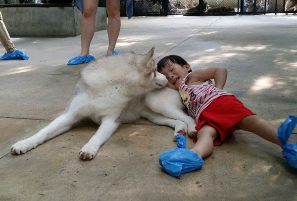 Cafe chó Husky giữa lòng Bangkok - 5