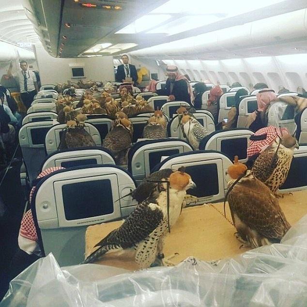 80 con chim ưng ngồi trong khoang hạng nhất của một chuyến bay