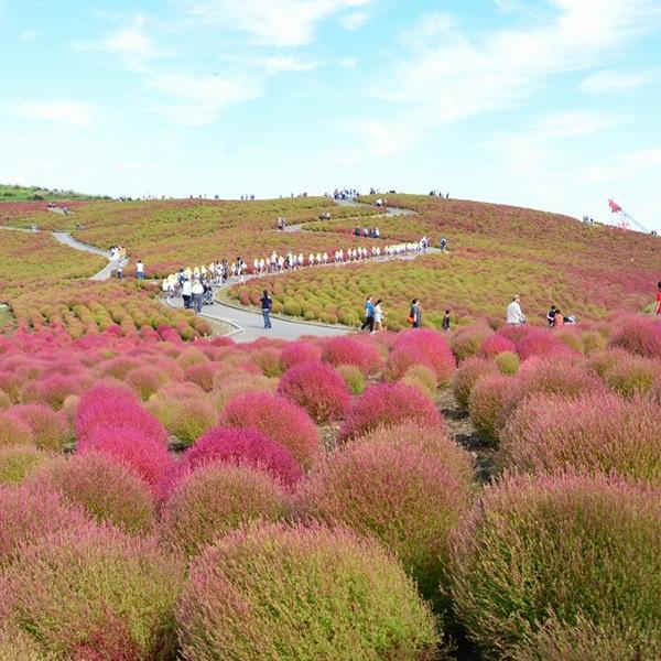 Đây là nơi duy nhất cho phép bạn ngắm khung cảnh màu sắc đối lập giữa màu đỏ của ngọn đồi và màu xanh của bầu trời.