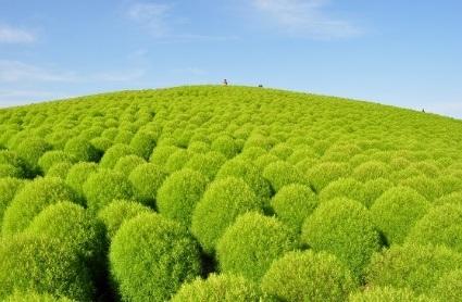 Ngọn đồi với màu xanh tươi của mùa hè