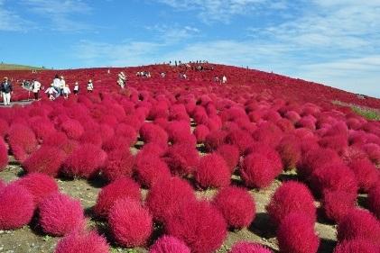 Ngọn đồi được bao phủ bởi màu đỏ rực của mùa hè