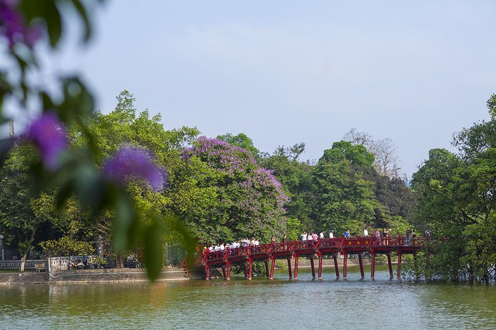 Bằng lăng tím tại cầu Thê Húc - Hồ Gươm