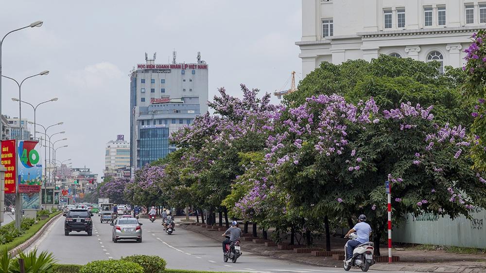 Ra đường Hà Nội trong một sáng tháng 5 để thêm yêu những màu hoa trong thành phố...