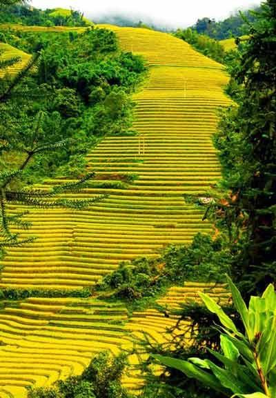 Ruộng bậc thang Sapa (ảnh minh họa: Phạm Ngọc Triển)