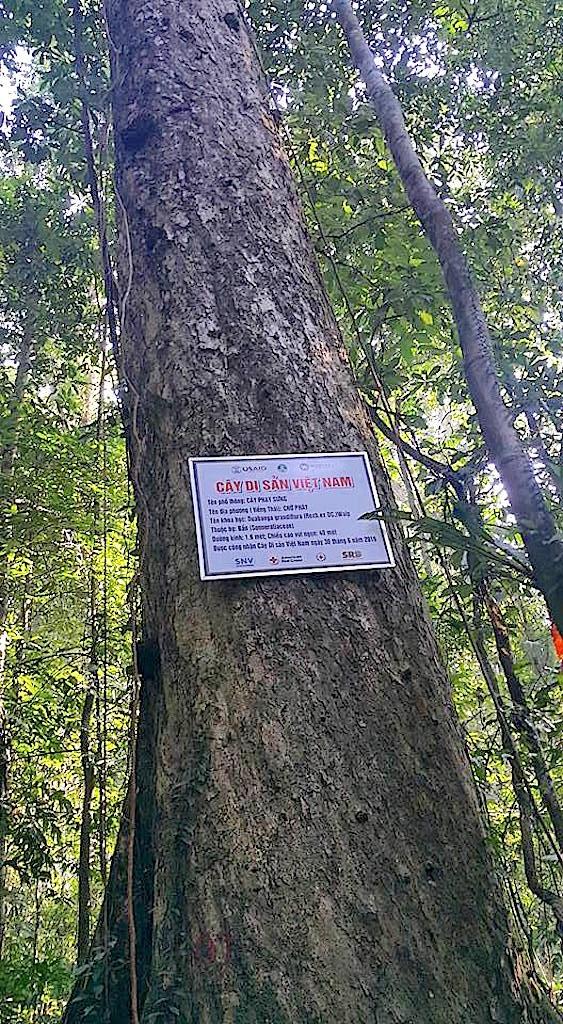 56 cây sa mu dầu cùng 5 cây săng vì thuộc khu bảo tồn thiên nhiên Pù Hoạt được công nhận cây di sản Việt Nam.