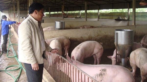 Nhiều người nuôi lợn cho rằng một số quy định nuôi gia súc bất hợp lý gây khó khăn cho người nuôi