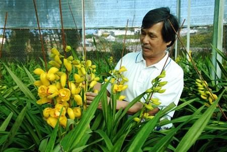 Ông Quỳnh buồn bã nhìn hoa nở sớm