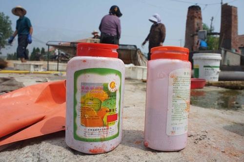 Chất carmine được các gian thương dùng để nhuộm màu cho tôm khô.