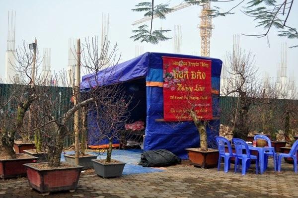 Nhiều chủ vườn còn phải căng lều, dựng bạt ngủ ngay tại vỉa hè để trông đào.