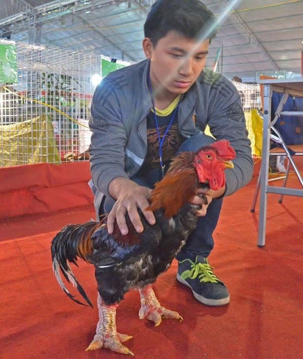 Con gà Đông Tảo có nguồn gốc từ Hưng Yên có giá 9 triệu đồng.