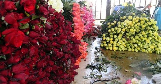Các vựa thu mua hoa hiện đang chạy khắp nơi để gom hoa hồng các loại nhưng vẫn không đủ hàng
