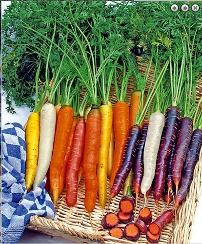 Những cây cà rốt nhiều màu độc đáo