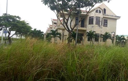 Cả khu đất vàng bỏ hoang cỏ lau mọc suốt mấy chục năm nay
