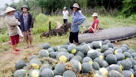 Xuất khẩu nông sản: Vai trò tham tán thương mại ở đâu?