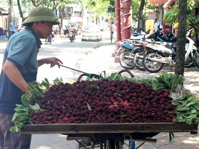 Thanh mai rừng đang được bán khá nhiều trên các tuyến phố ở Hà Nội