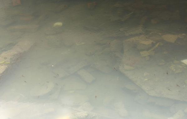 Nhiều con cá nhỏ bơi tung tăng