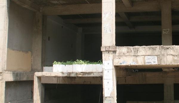 Một số hộ dân tận dụng trồng cây ở trên tầng