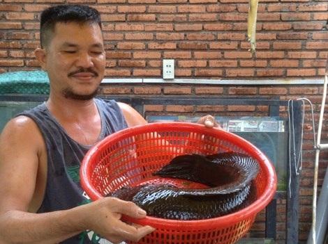 Ông Mộng và con cá nuôi bự chà bá. Ảnh: Trần Ngọc