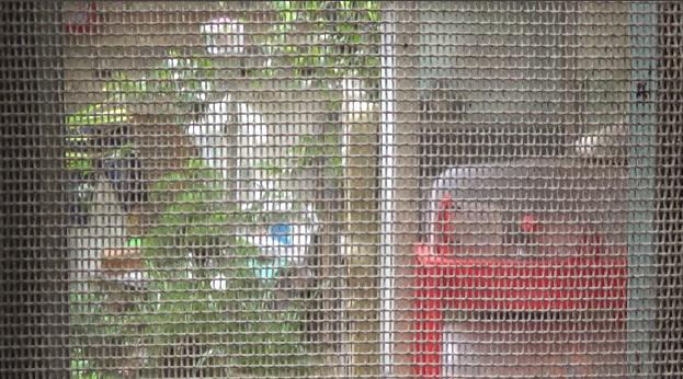 Cực chẳng đã, các hộ dân tại đây đã phải chăng lưới để hạn chế muỗi, mùi hôi thối như thế này.