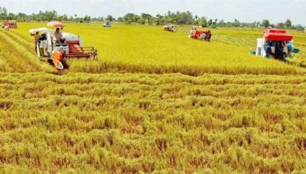 Vốn FDI vào nông nghiệp chỉ chiếm 1,2% tổng vốn đầu tư FDI tại Việt Nam.