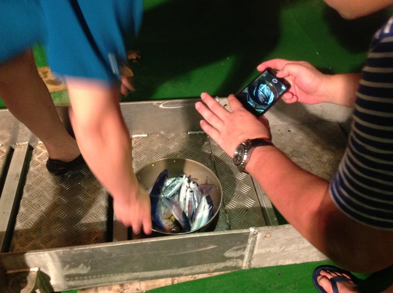 Cá chuồn được sử dụng để làm mồi câu.