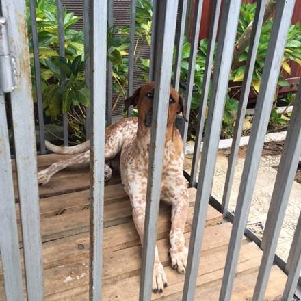 Con chó có bộ lông giống hổ cùng với gia đinh làm nhiệm vụ trông giữ căn biệt thự trong những ngày chủ nhân của nó vắng nhà.