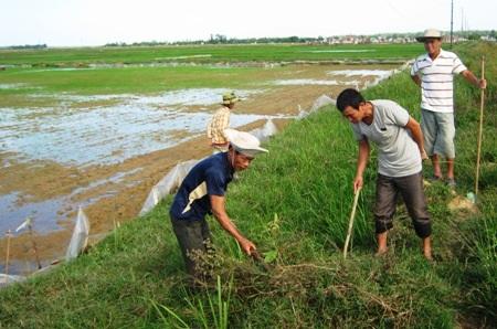 Người dân tổ chức đào chuột nhằm diệt trừ tận gốc tại nơi chúng sinh sản
