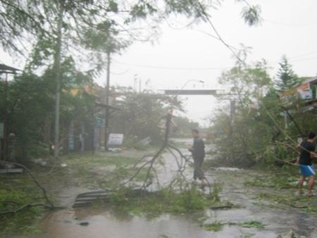 Nhiều cây lớn cũng bị gãy