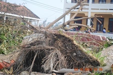 Cơ sở vật chất, cây cối bị đổ nát.