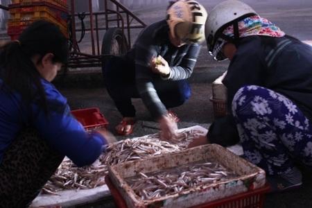 Chị em phụ nữ chọn lọc cá ngay tại cảng để đưa ra chợ bán