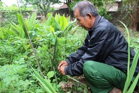 Một trong số các loại thuốc chữa rắn cắn được ông trồng trong vườn