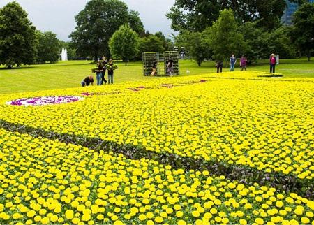 Rất nhiều hoa màu vàng đã được tập hợp