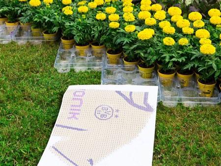 Mỗi chậu hoa chỉ có một bông và cả nghìn chậu hoa nhỏ đã được trưng dụng