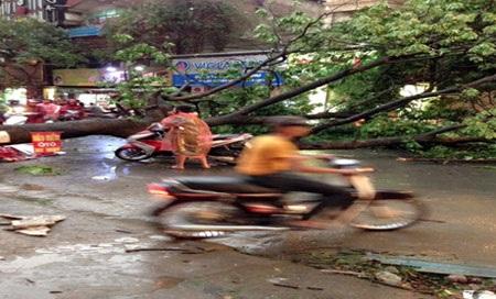 Cây đổ chắn ngang đường ở Lạc Trung