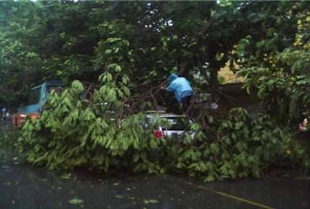 Xe ô tô bị cây đổ đè lên ở đường Trần Đại Nghĩa