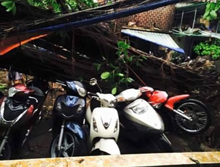 Xe máy bị hư hỏng do cây đổ gẫy đè lên