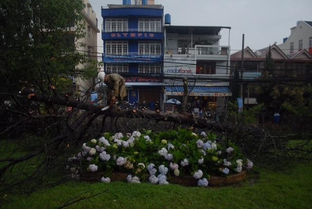 Cây đổ đè lên đường dây điện khiến cho hàng trăm hộ dân khu vực Ngã 5 Đại học Đà Lạt bị mất điện.