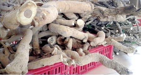 Cây xáo tam phân được bán với giá gần 100 triệu đồng