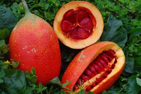 Bổ sung cho con chất béo có nguồn gốc động vật 30 %, chất béo có nguồn gốc thực vật từ dầu ăn 70%.