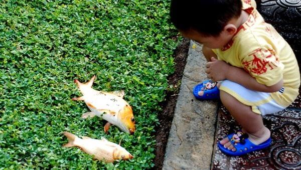 Câu cá ở kênh Nhiêu Lộc vừa phá hoại môi trường mà ăn cá đó còn có nguy cơ mắc bệnh (Ảnh minh họa)
