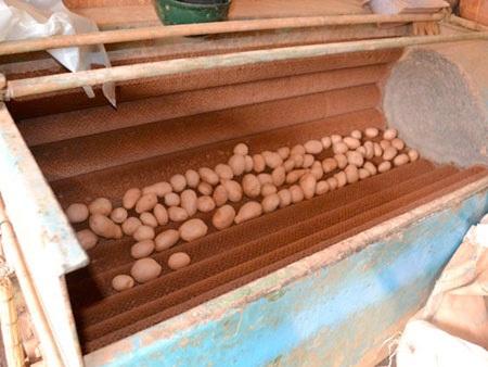 Máy rửa và nhuộm khoai tây Trung Quốc thành khoai Đà Lạt