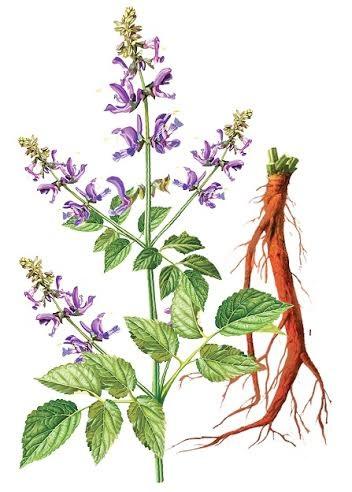 Huyết Sâm có tác dụng bổ huyết, hoạt huyết dưỡng não an toàn, hiệu quả.