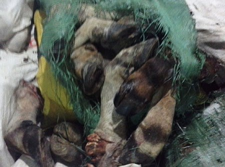 Chân trâu bò còn nguyên lông được chứa trong kho lạnh. Ảnh: Thú y TP.HCM