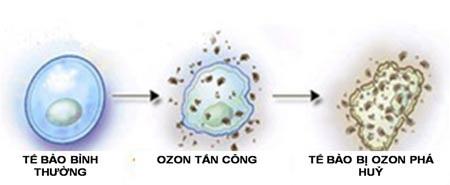 Mô phỏng các bước diệt vi khuẩn của ozone