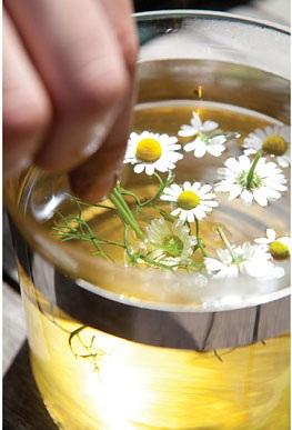 Trà camomile được cho là có đầy đủ các lợi ích đối với sức khỏe
