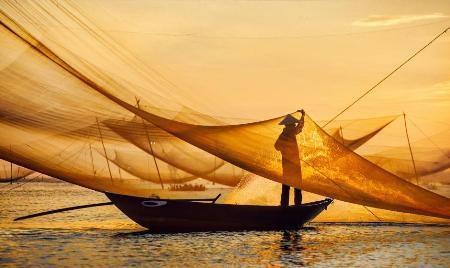 Ngày mới, lưới mới - Tran Bao Hoa