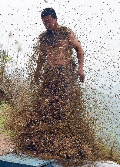 Đàn ong bắt đầu bao vây She