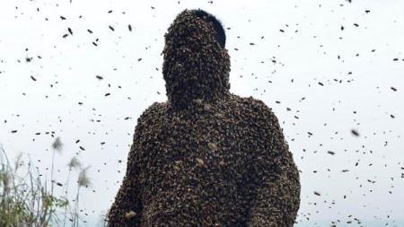 Ong phủ kín mặt