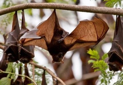 Giám sát chặt việc nhập khẩu động vật hoang dã từ châu Phi (Phương xem hộ tớ tin này nhé)