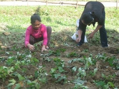 Hướng dẫn bà con trồng rau đúng cách